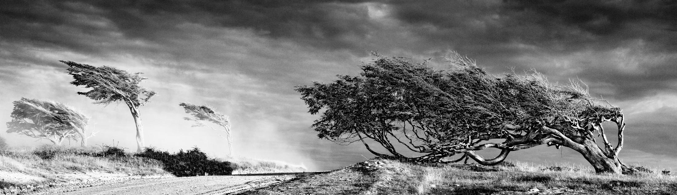 Grito al viento