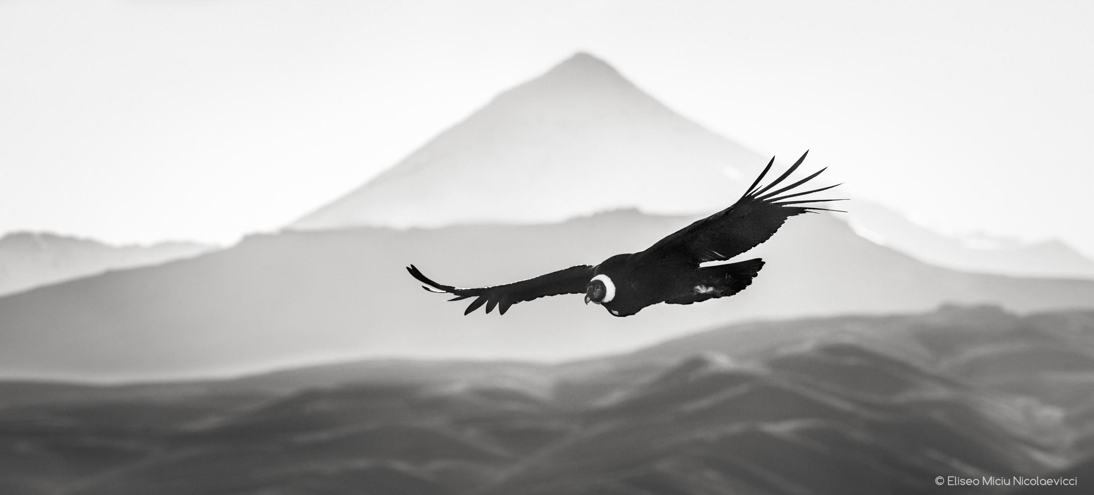 Emblema patagonico