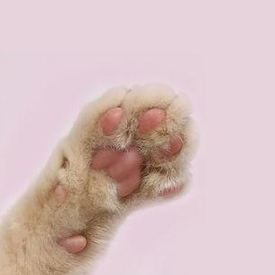 Freak Meowt Paw 1.jpg
