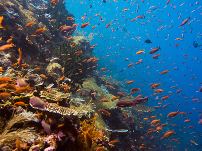 Diving in Indonesia 101