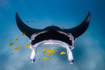 Tropical Oceans - Manta Glide