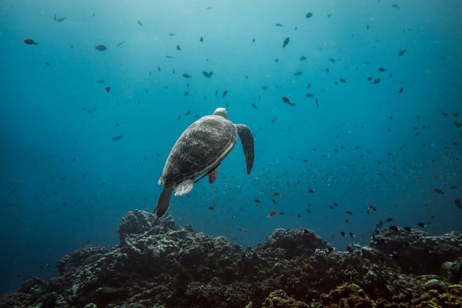 Tropical Oceans - Turtle Takeoff