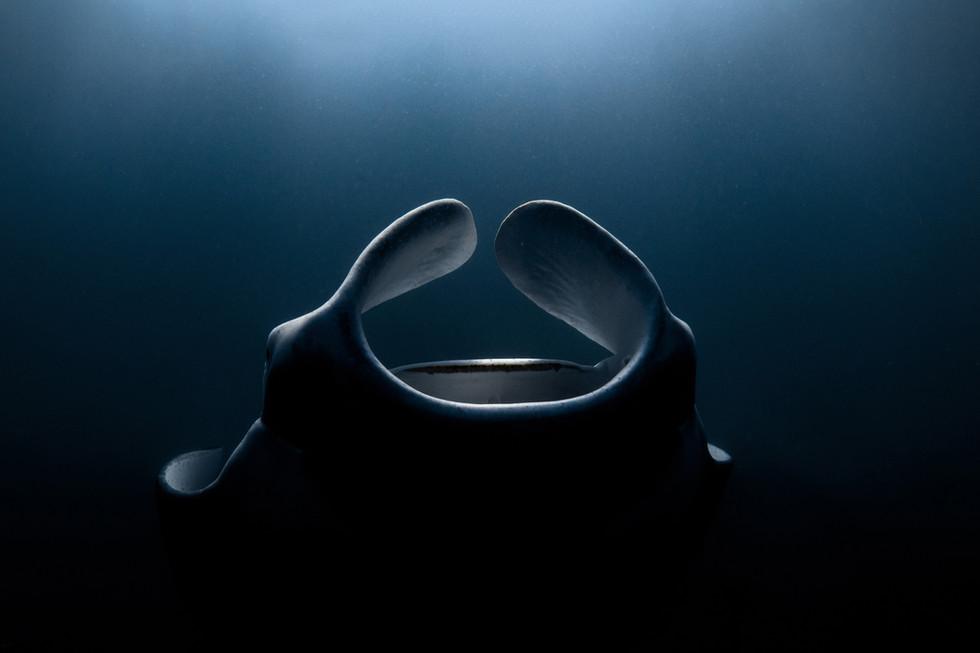 Ocean - Into the Light