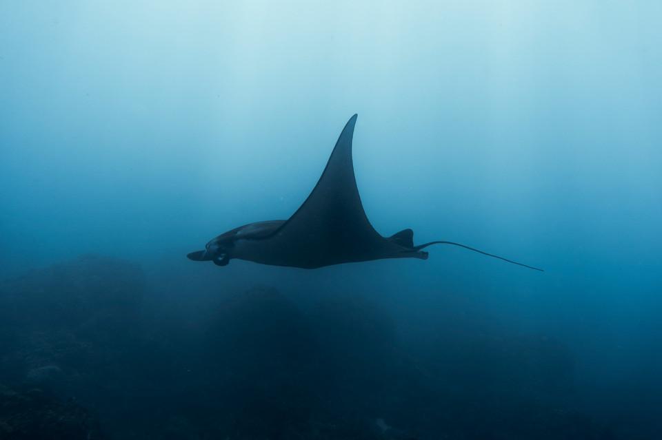 Tropical Oceans - Penida Manta