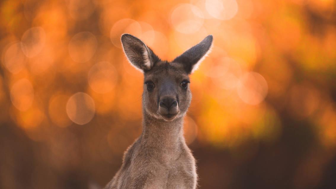 Kangaroo Sunset.jpg