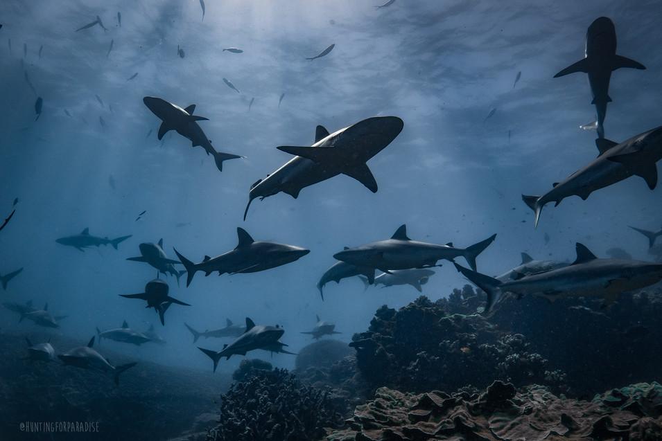 Deep Oceans - Sharkwater