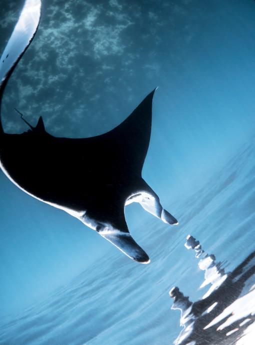 Ocean - Flight