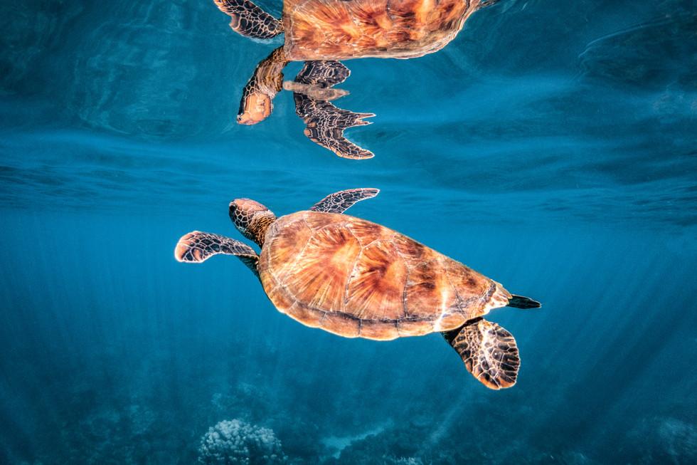 Ocean - Turtle glass off