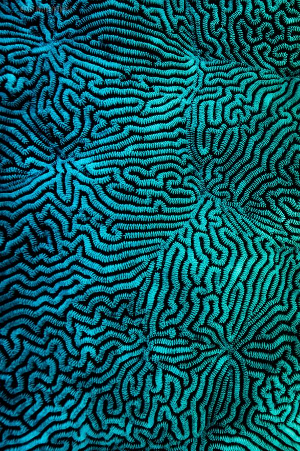 Ocean - Aqua Coral