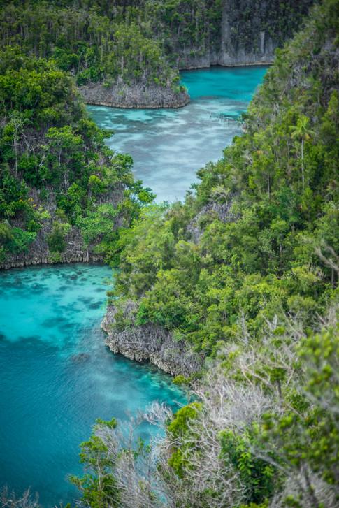 Earth - Raja Ampat, West Papua