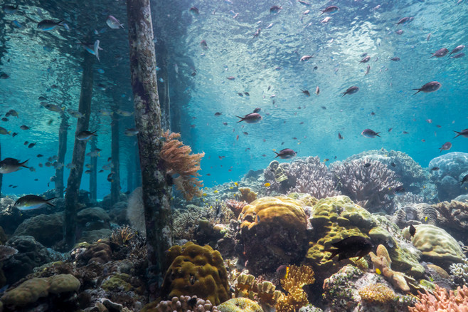 Tropical Oceans - Raja Ampat