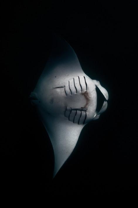 Deep Oceans - Manta shade