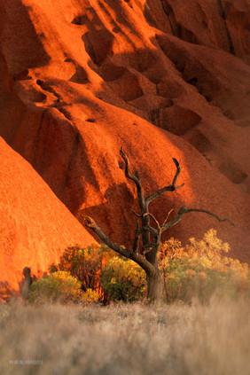 Landscapes - Uluru