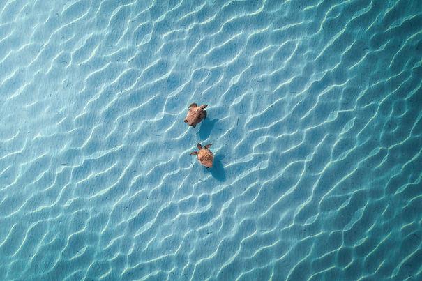 Aerial Turtle.jpg