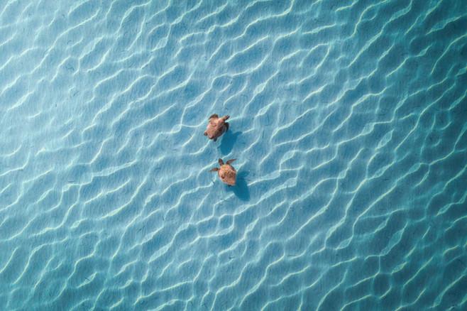 Tropical Oceans - Loggerheads