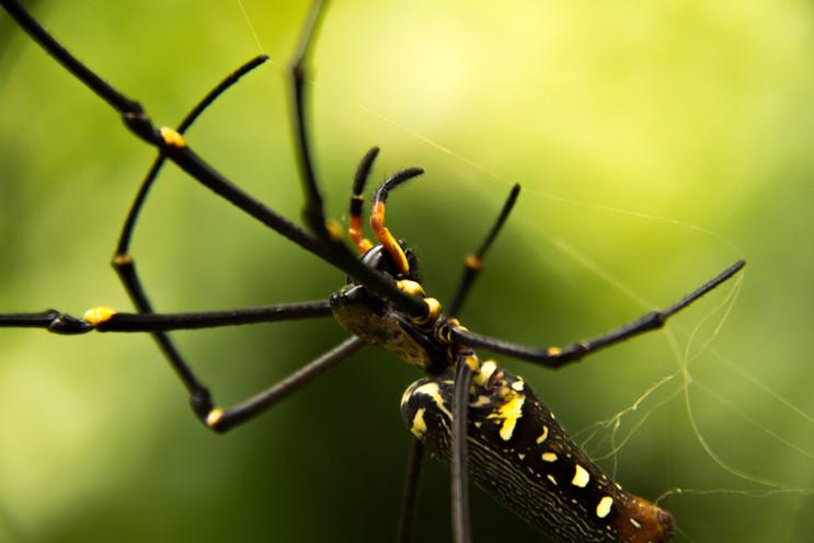 Nature - Spider, Sumatra
