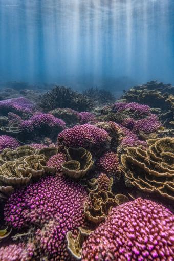 Ocean - Lavender patch