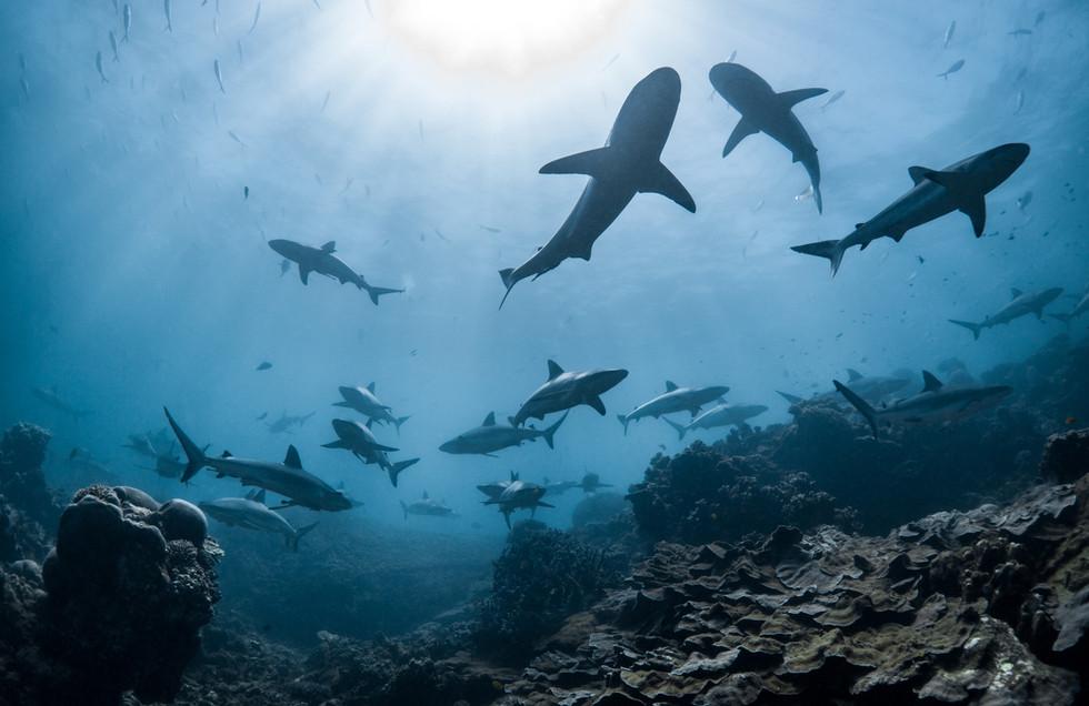 Ocean - Consume