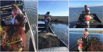 Derelict Crab Trap Removal