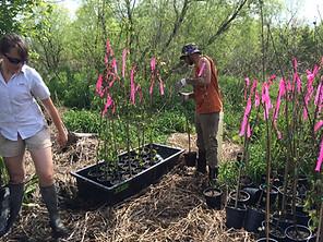 Braithwaite Tree Planting