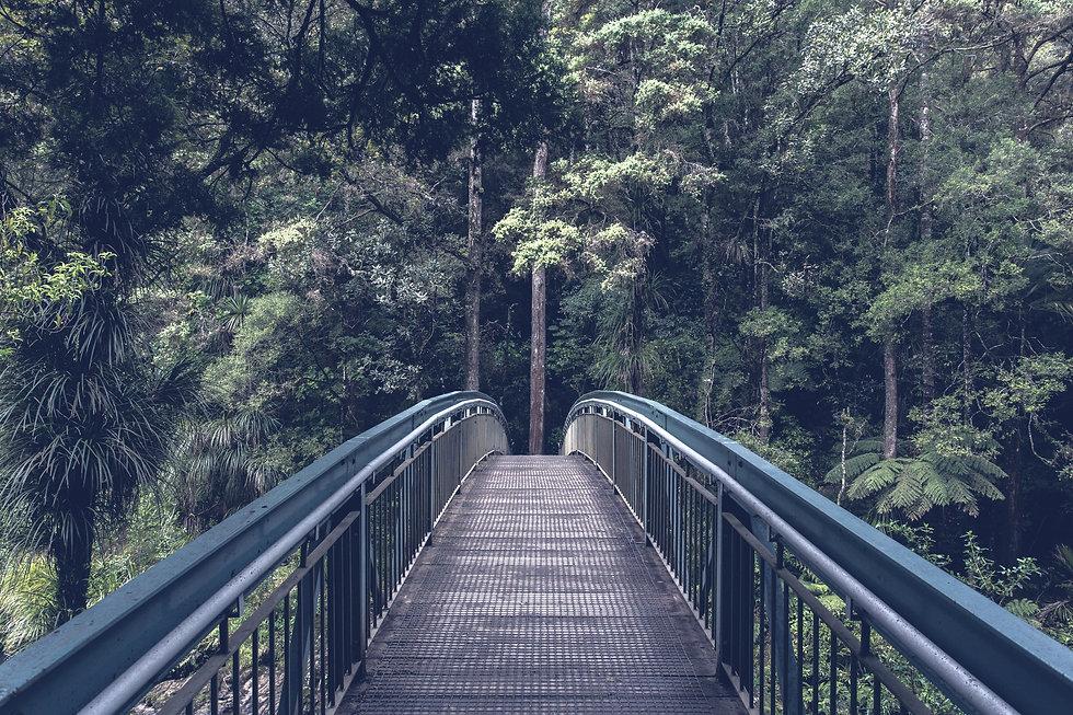 Bridge into the Woods_edited.jpg