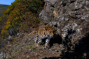 Земля Леопарда.jpg