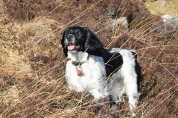 Cassie in heather