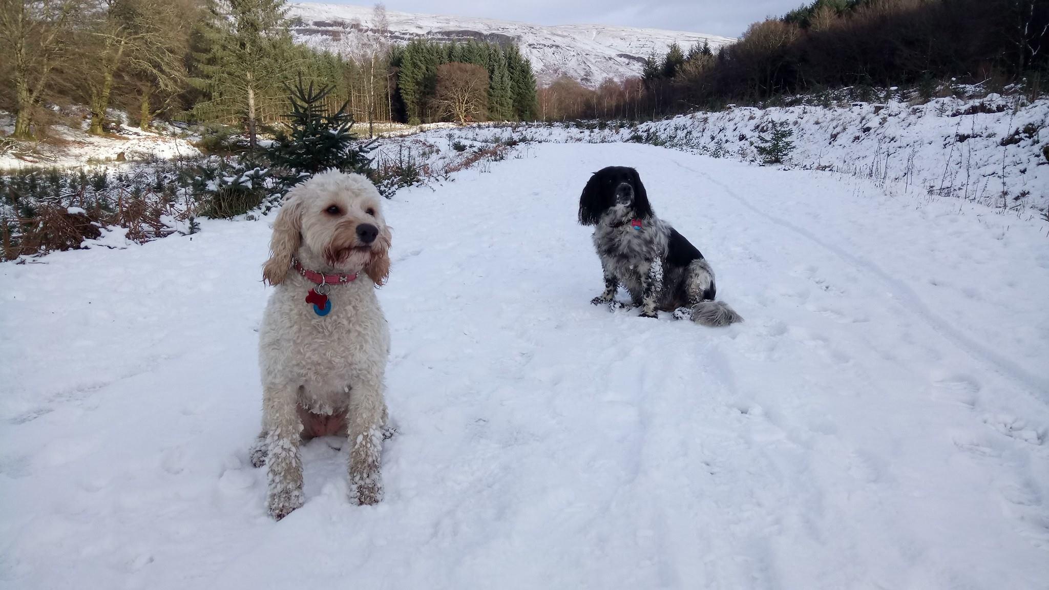 Poppy and Cassie posing