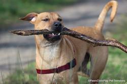 Buddy and stick