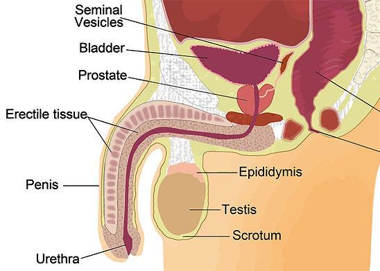 UTASA, Declin, Quantité Total Spermatozoïdes