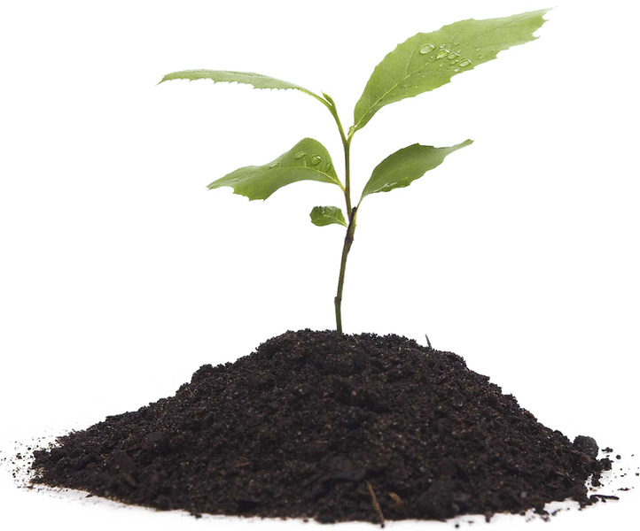 Growing-Plant-Transparent-Background_edited.png