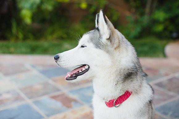 Starfish Pink Dog Collar