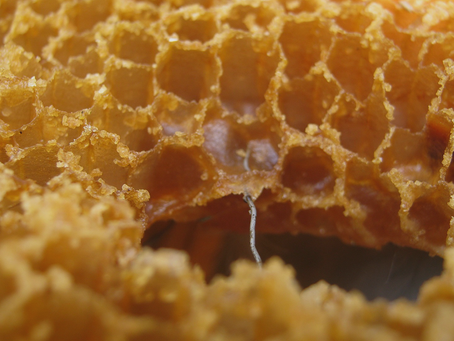 Preservando com cera de abelha