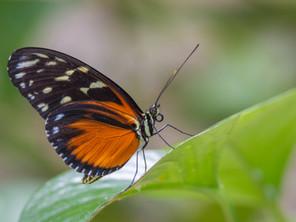 Butterflies Butterflies