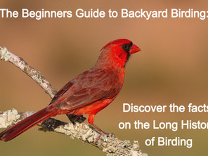 The Beginners Guide to Backyard Birding: Discover the facts on the Long History of Birding