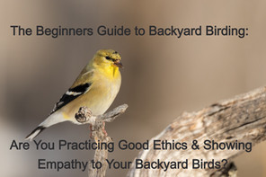 The Beginners Guide to Backyard Birding: Practice Good Ethics & Show Empathy to Your Backyard Birds