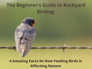 The Beginners Guide to Backyard Birding: Amazing Facts on How Feeding Birds is Affecting Nature
