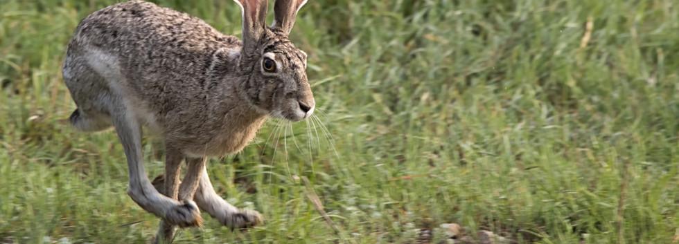 Running Jackrabbit