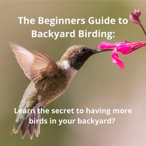 The Beginners Guide to Backyard Birding: Learn the secret to having more birds in your backyard?
