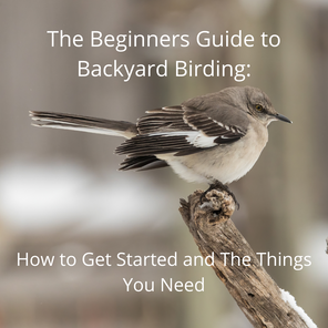 The Beginners Guide to Backyard Birding:  How to Get Started and The Things You Need