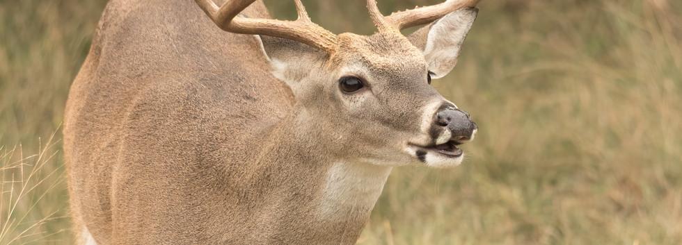 Lip Curl Buck
