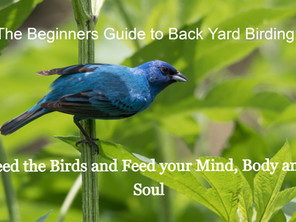 The Beginners Guide to Backyard Birding: Feed the Birds and Feed your Mind, Body and Soul