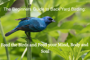 The Beginners Guide to Back Yard Birding: Feed the Birds and Feed your Mind, Body and Soul