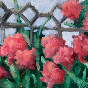 Peonies along a wrought iron fence-2.jpg