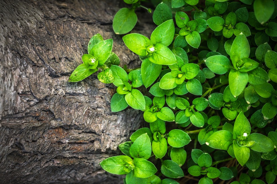 Plants-Hwalyeob-Leaf-Wood-Green-Nature-T