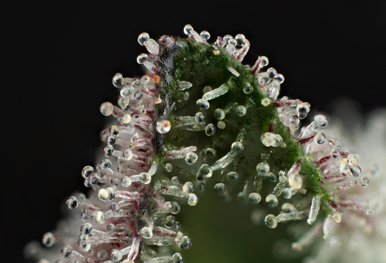 GMO12