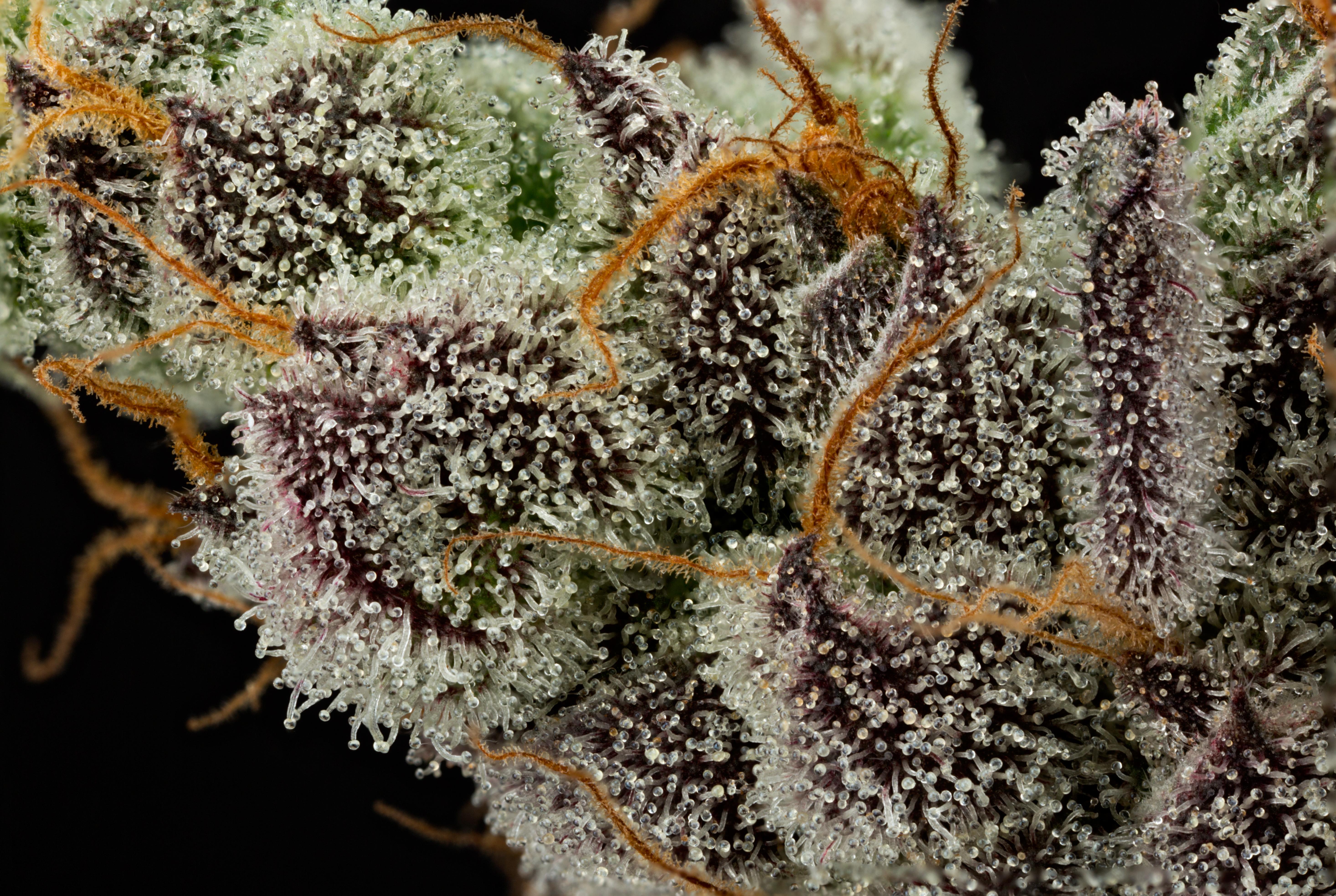 GMO05