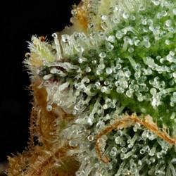 GMO04crop