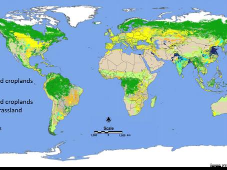 Can bioirrigation help farmers in rain-fed areas?