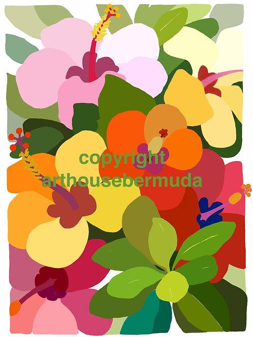 Hibiscus Glory